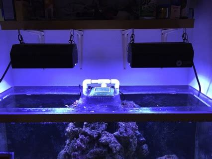 Lu Metal Halide Aquarium free reef aquarium lights 2x pfo hqi 250w metal halide pendants and evc electronic ballasts
