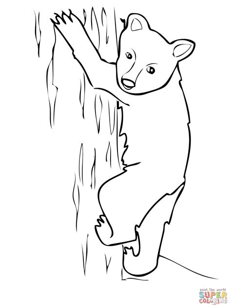 coloring page bear cub polar bear cubs grizzly coloring page coloring pages of