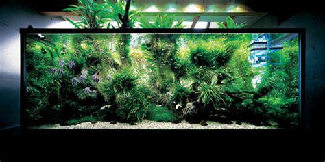 aquarium design amano indonesia nature aquarium decor from takashi amano