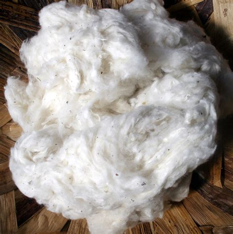 good cotton raw cotton made in the usa 1 pound good to stuff or spin