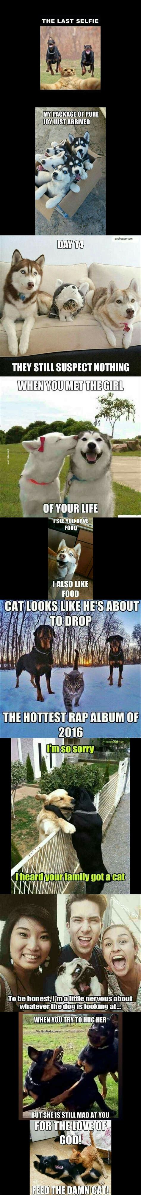 Funny Dog And Cat Memes - 17 best ideas about cat memes on pinterest funny cat