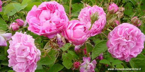 ste antiche fiori hotel r best hotel deal site