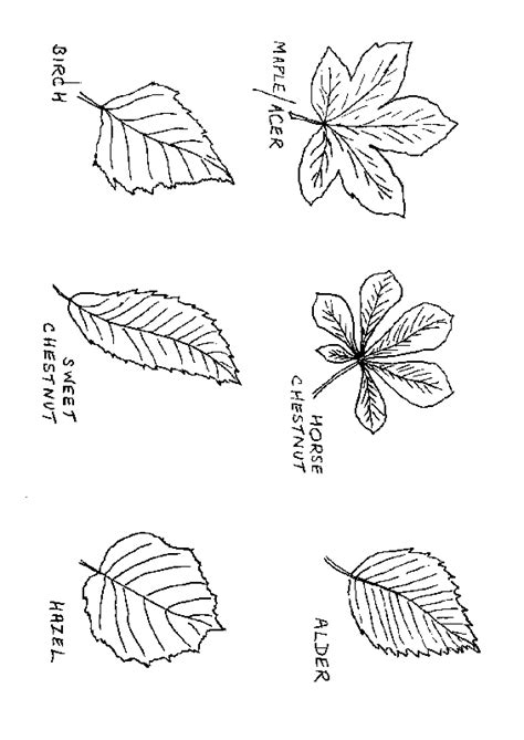 leaf identification coloring pages fichas de ingl 233 s para ni 241 os autumn crafts for kids