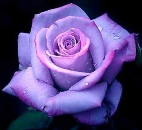 fiori rosse foto semi fiori rosse viola nere a reggio nell