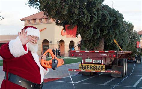 fresh cut christmas tree kingman az arizona s tallest fresh cut tree arrives oct 24 sonoran news