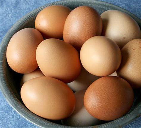 buff orpington egg color chicken breeds backyard flock hobby farm living