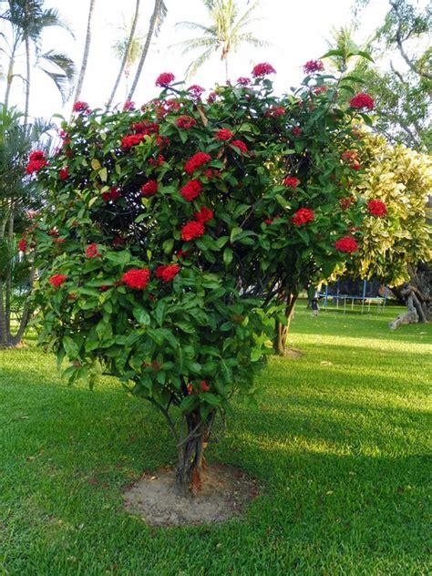 temp駻ature id饌le chambre joli jardin fleuri beau jardin agrandir on dirait le sud
