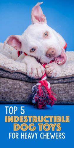 toys for heavy chewers 17 best images about lifestyles with dogs on for dogs pets and seasonal
