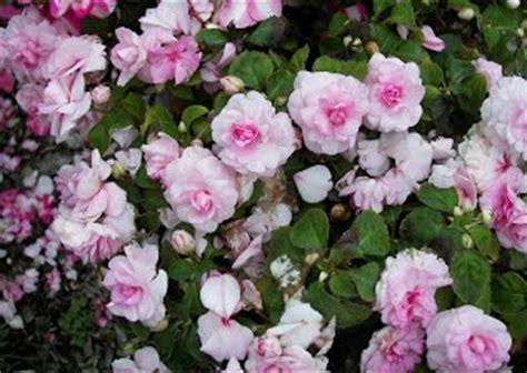 Immergr Ne Pflanzen F R Sonnige Standorte 224 by 7 Balkonblumen Gartenbau Theorie