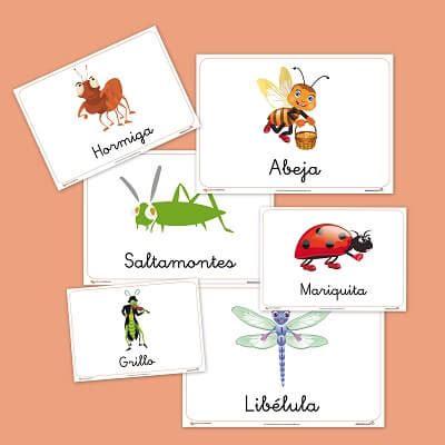 poemas de insectos para ninos fichas de animales para ni 241 os fichas de los insectos