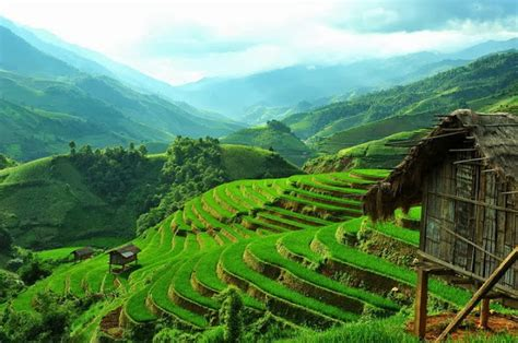 3d Wallpaper 50924881 Terrace Rice Fields Bali beautiful terraced fields in most beautiful places in the world free wallpapers