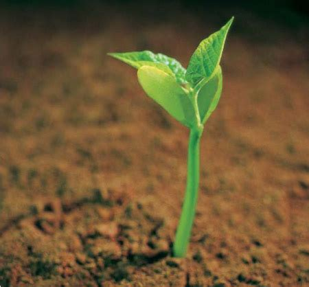 baby plants the seed of your soul travelling yogi