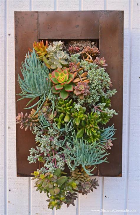 splendid succulent planter frames  beautify  home