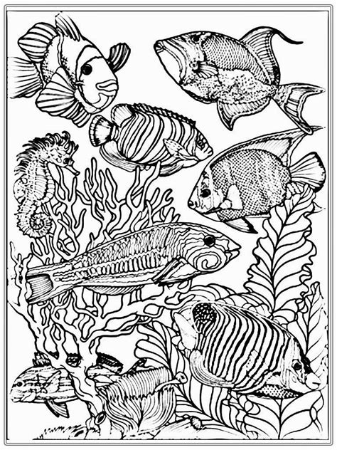 colouring book for adults guardian fish color pages free fish coloring pages