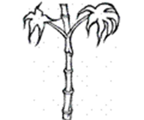 bamboo tree coloring page bamboo coloring pages 4 bamboo printable pages bamboo
