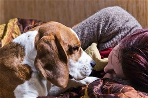oxytocin for dogs kisses oxytocin may make fido more affectionate