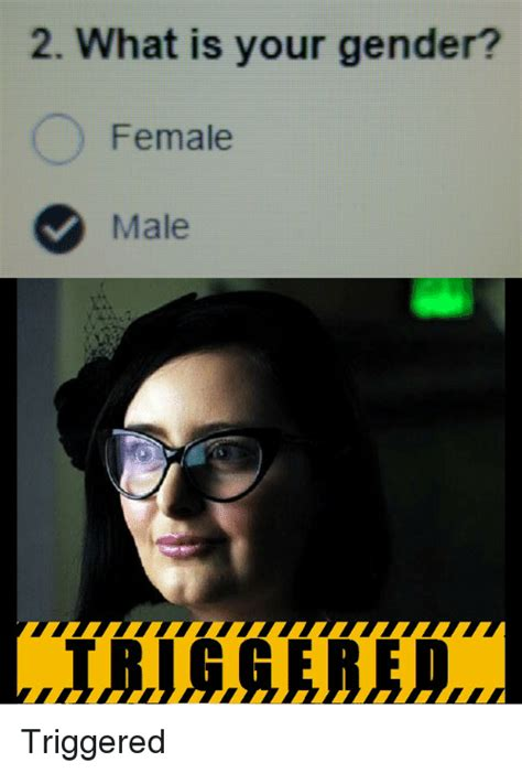What Is Your Meme - 2 what is your gender female male triggered what is meme on sizzle