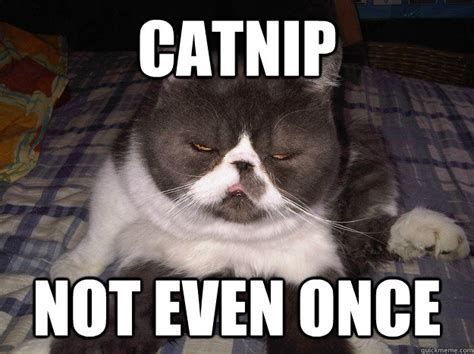 catnip not even once misc quickmeme
