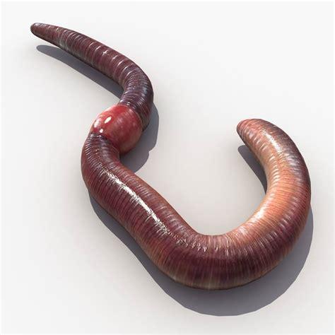 Obat Cacing Kalung manfaat dan khasiat cacing tanah tani jaya mandiri
