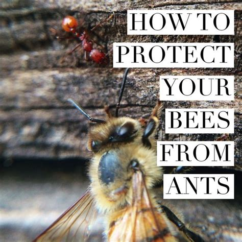 Learn How To Keep Ants Out Of Your Hives Beekeeping How To Raise Bees In Your Backyard