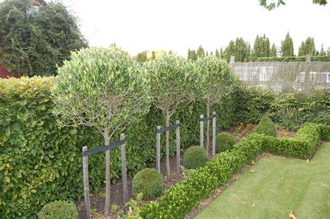 Standard Garden by Serenity Nursery New Zealands Earthly Delights