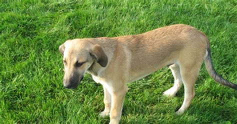 sundowners in dogs sundowner s in dogs ehow uk