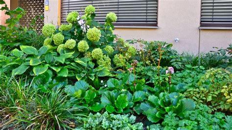 vorgarten bepflanzung vorgarten garten berlin nelka bepflanzung