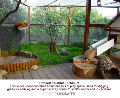 indoor garden for rabbits this protected rabbit enclosure really is the best with