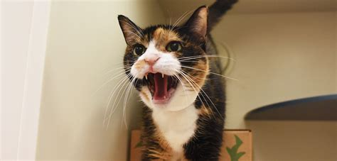 aggressive rescue aggression in cats aspca