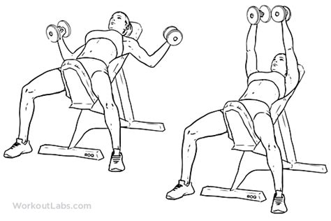 incline bench flyes incline bench dumbbell fly illustrated exercise guide