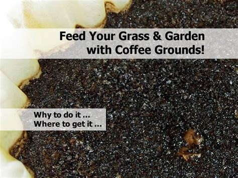 Are Coffee Grounds For Your Garden by Feed Your Grass Garden With Coffee Grounds