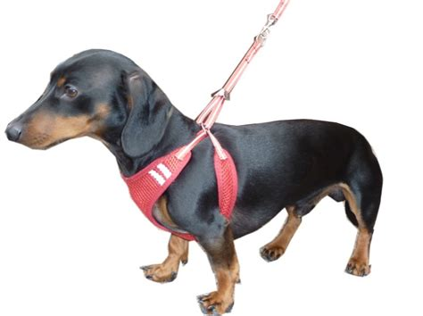 no pull harness for dogs hdp no pull no choke puppy harness and lead combo ebay