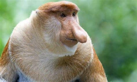 imagenes de animales extraños reales animales m 225 s raros del mundo informaci 243 n y caracter 237 sticas