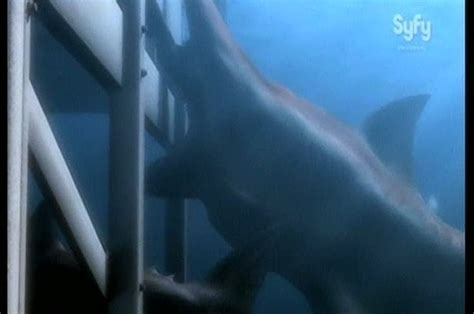 malibu shark attack 301 moved permanently