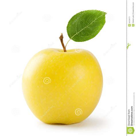 imagenes de manzanas rojas animadas ripe yellow apple with leaf stock image image of
