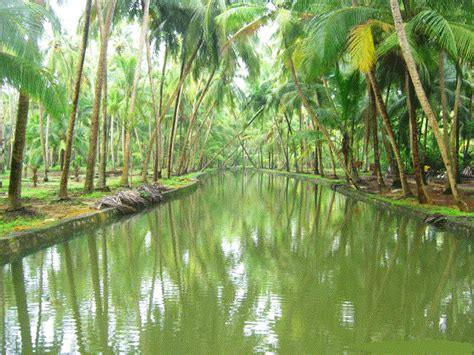 kerala boat house quotes 30 kerala images that will make you want to visit kerala