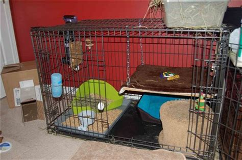 puppy crate in bedroom or not bi level condo from dog crate binkybunny com house rabbit information forum