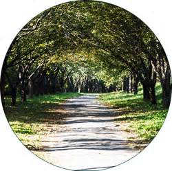 daycare vancouver wa tree service vancouver wa arborscape tree care