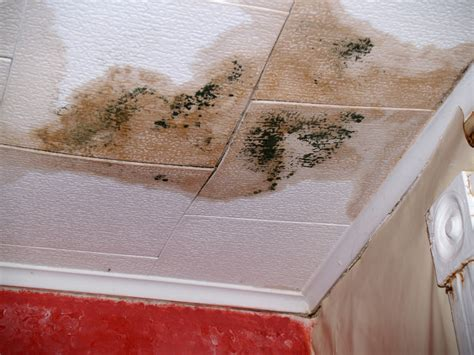 black mold and how to prevent this toxic substance