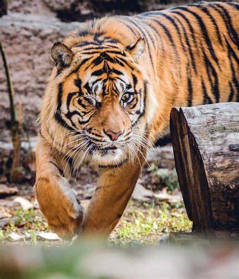 barcelona zoo animals zoo barcelona animals barcelona life