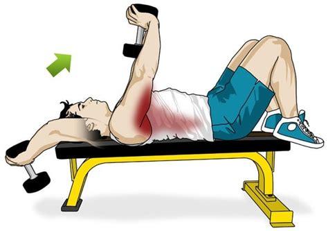 Exercice De Musculation Avec Banc by Les Meilleurs Exercices De Musculation Avec Halt 232 Res 1