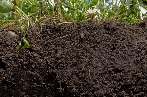 is fertilizer soil quality better ground