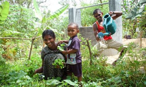 Home Vegetable Garden In Sri Lanka Dignity And New For Sothinathan World Vision