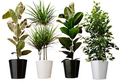 Mooie Planten Voor Binnen by 20 Kamerplanten Die De Lucht Zuiveren 187 De Voedzame Keuken