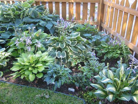 Hosta Garden Ideas Daily Knick Knacks 4 1 11