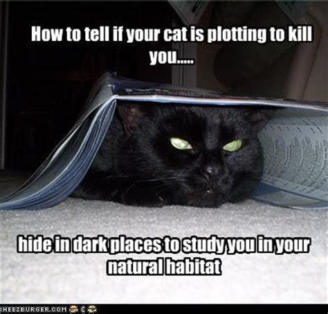 how to tell if your cat is plotting to kill you the oatmeal 24 best images about how to tell if your cat is plotting