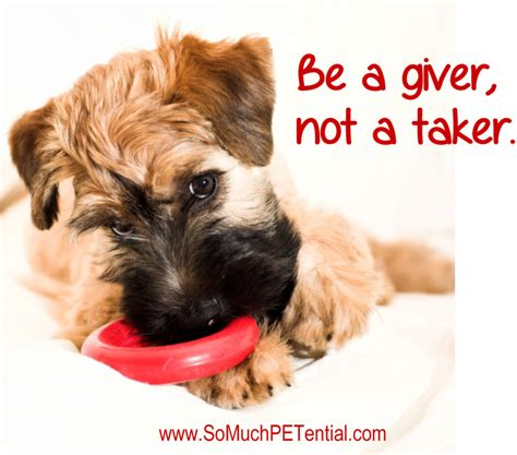puppy resource guarding tip for preventing and other pet resource guarding so much petential