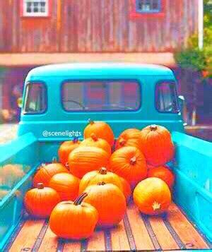 Blue Pumpkins Fruit Cutters And Pretty Stuff amazing autumn background beautiful image