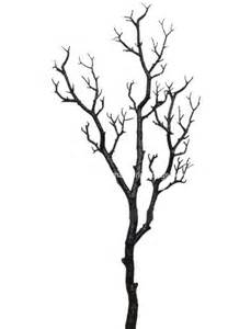 Manzanita Tree Black Manzanita Tree Branches Black Manzanita Centerpiece Branch