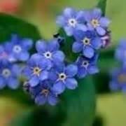 fiori si regalano ad un uomo fiori festa della donna regalare fiori